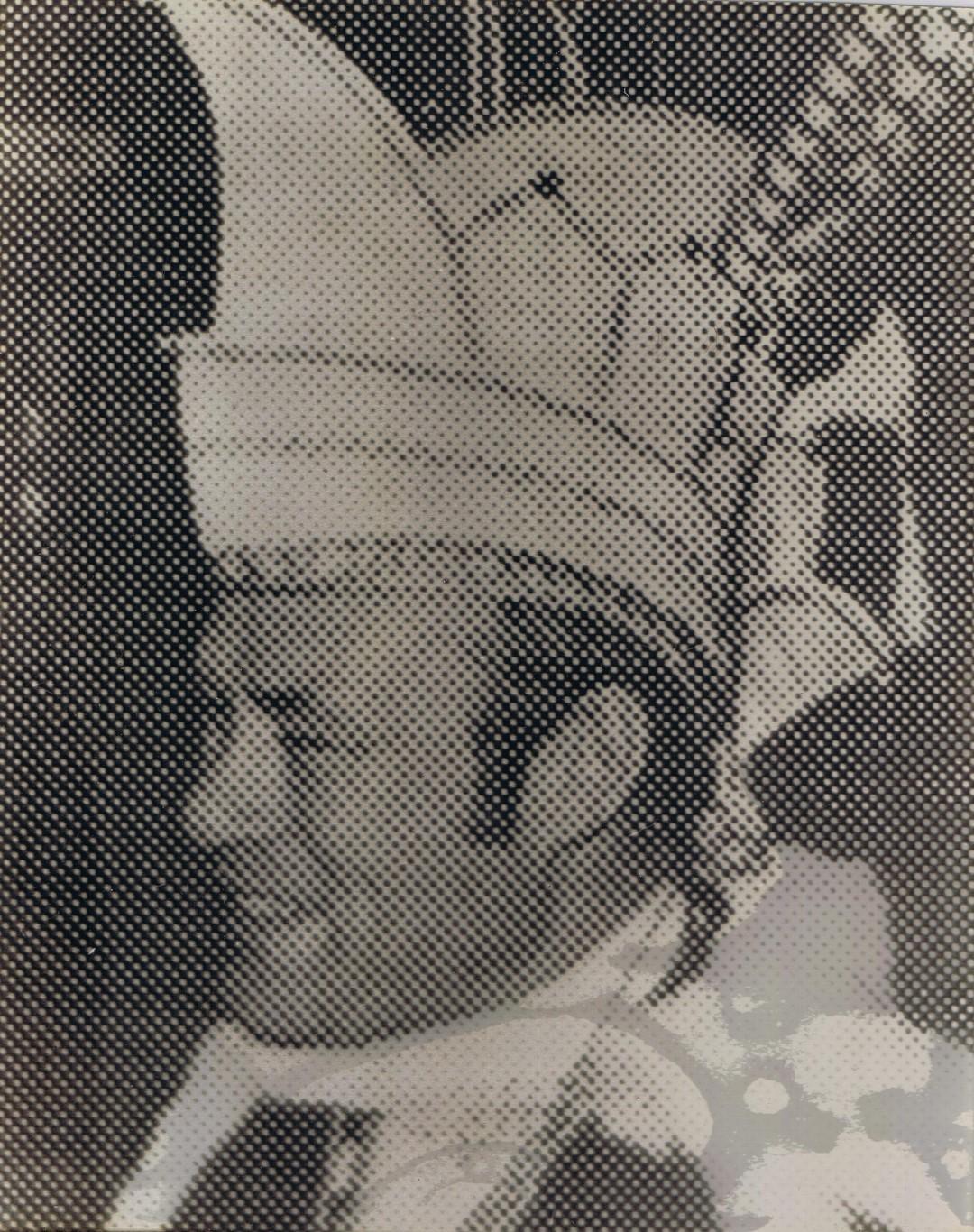 1970 1971 Prins Jo de 1e Jo Keijzer